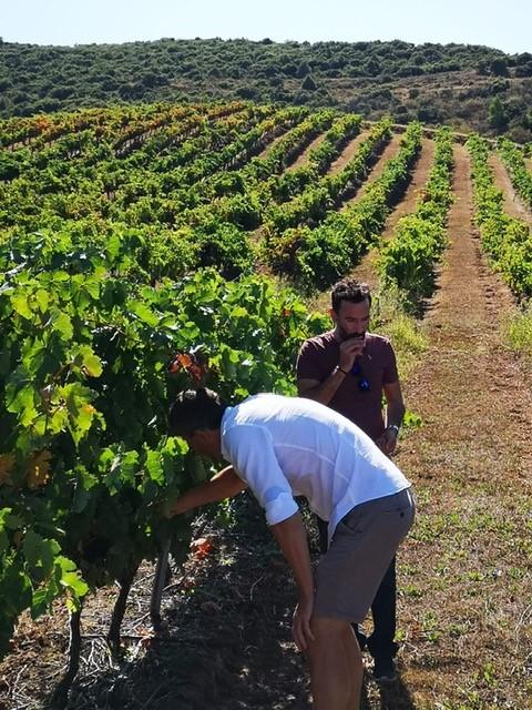 Op bezoek in Navarra op zoek naar de beste wijnen , straks voor jullie in El Pozo.